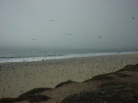 Tons of gulls