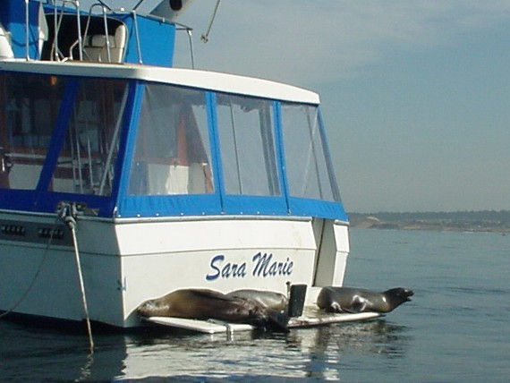 Sea lions on boats